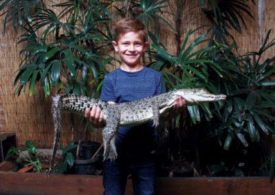 Crocodile Holding Photo