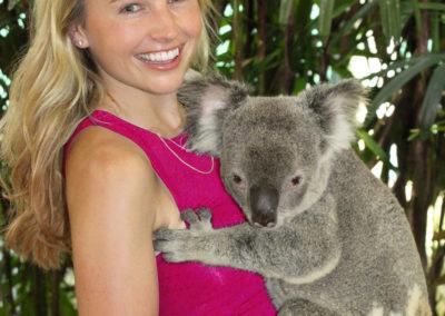 koala holding photo wildlife habitat