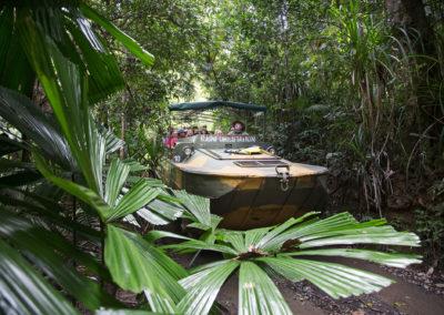 Rainforestation