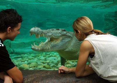 Goliath The Estaurine Crocodile