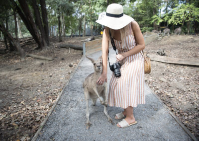 Wallaby Feeding Port Douglas Wildlife Habitat