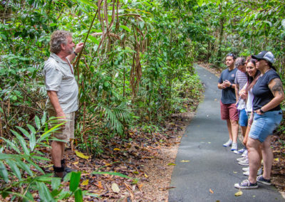 rainforest-nature-walk-josephine-falls