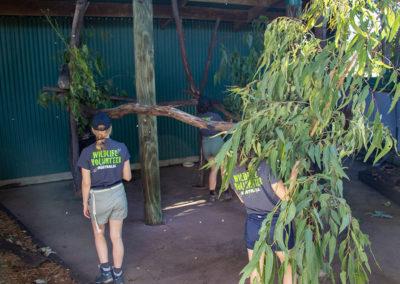 Volunteers-Maintaining-Enclosure