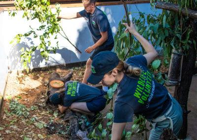 Wildlife-Habitat-Volunteers-Koala-Feeding