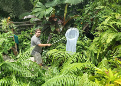Wildlife-Volunteer-at-the-Australian-Butterfly-Sanctuary