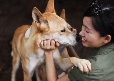 keeper-and-dingoes-rainforestation-nature-park