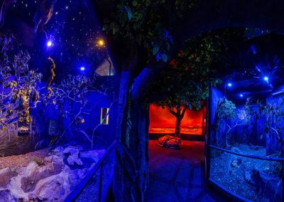 nocturnal-habitat-wildlife-habitat-port-douglas