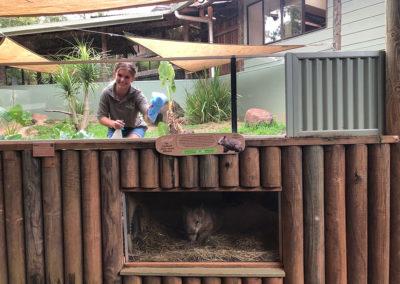 volunteer-cleaning-wombat-enclosure-rainforestation-nature-park