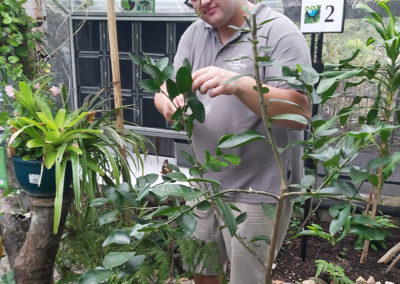 volunteer-collecting-eggs-at-australian-butterfly-sanctuary