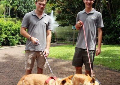 volunteers-walking-dingoes-rainforestation